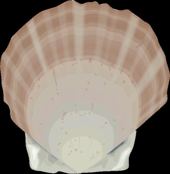 ホタテガイ(帆立貝)のイラスト