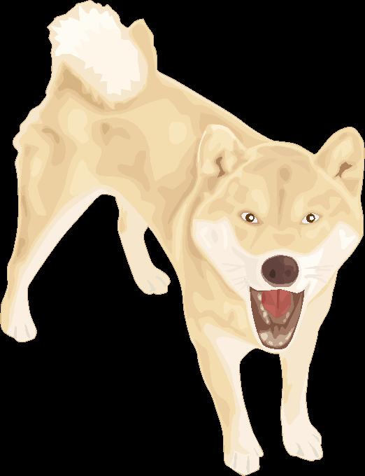 吠えている若い柴犬のイラスト