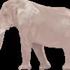 精細に描いた象のイラスト