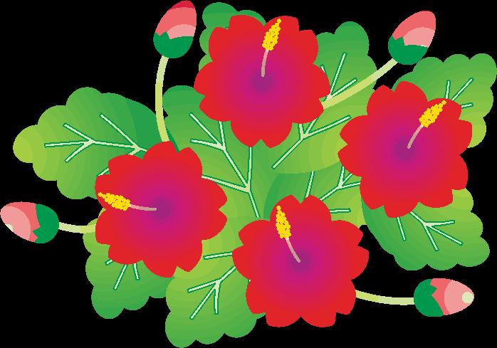 南国の花ハイビスカスのイラスト コピペできる無料イラスト素材展