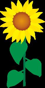 夏を代表する花、ひまわり