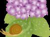 梅雨どきのアジサイとカタツムリのイラスト