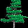 見栄えのする松の木のイラスト