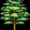 堂々とした姿の高木のイラスト