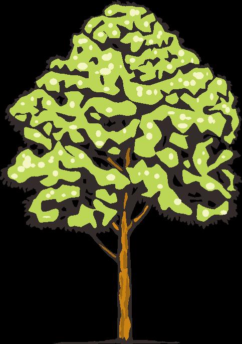たくさんの葉が茂っている木のイラスト