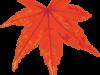 赤く紅葉したモミジのイラスト