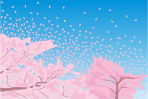 青空に舞う桜吹雪