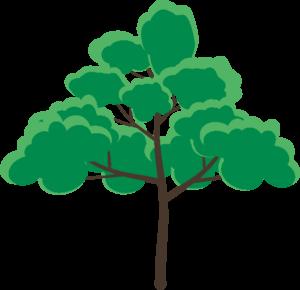 葉の生い茂っている木