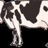 ホルスタインと呼ばれている牛のイラスト