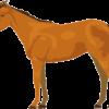 スマートな馬であるサラブレッドのイラスト