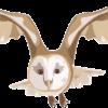 羽根を広げて飛んでいるメンフクロウのイラスト