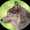 森の中のオオカミのイラスト